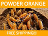 LIVE POWDER ORANGE ISOPODS Bioactive Cleaner for terrarium counts 15 30 60 +