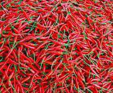 100 Red Chili Pepper Seeds Capsicum Hot Cayenne Pepper S040