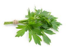Lovage 100 seeds    Levisticum officinale * herb * ez grow * CombSH E61