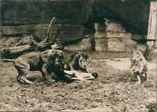 Nuremberg, suicide d'un jeune réfugié tchécoslovaque au Zoo Vintage silver