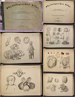 Baumgärtner Physiologischer Atlas 1853 Siamesische Zwillinge Medizin Wissen sf