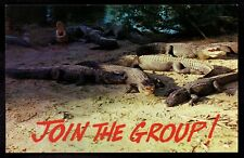 "Alligators on Shore ""Join the Group"" Florida unused Postcard pc223"