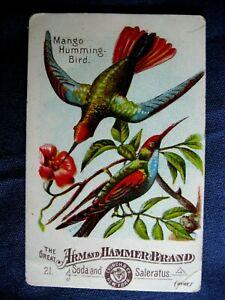 Victorian Trade Card Arm & Hammer Church #21 Mango Humming - Bird  NICE 6C