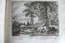 C21-98 Gravure religieuse 17e l'homme de Dieu est tué par un lion (Roys 13)