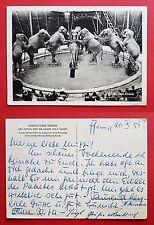 AK Zirkus Krone um 1957 Circus Carl Krone Manege mit Elefanten       ( 21787