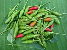 100 SEEDS RED THAI CHILI PEPPER VERY HOT OGANIC HEIRLOOM FOR PLANT GARDEN