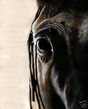 Giclee Print Thoroughbred Warmblood Horse Painting Art Quarter Watercolor Sorrel