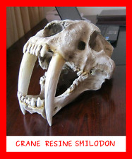 COLLECTION FOSSILE RESINE CRANE SMILODON SQUELETTE TIGRE DENTS SABRE DINOSAURE