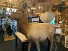 Professional Taxidermy Life Size Elk Bull Mount with Detachable Spike Antlers