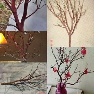 """12 RED Manzanita Branches for Vertical Centerpieces  20""""-24"""" Fresh-Cut, Trimmed"""