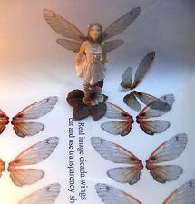 OOAK Fairy Deep  cicada wings transparency sheet 6 pairs
