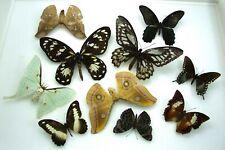 Schmetterling und Sammlung für Kunstwerk Fotografie X 10 Set Exemplare #461