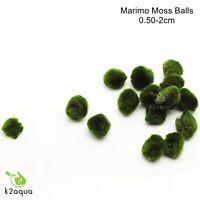 Baby Marimo Moss Ball 0,5-2cm Cladophora Live Aquarium Plant Fish Shrimp Nano