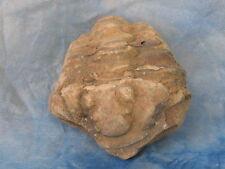 Fossilien Trilobit Versteinerungen Trilobiten