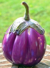 30 Fresh 2016 Heirloom Rosa Bianca Italian Eggplant Seeds, Organically Grown