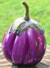 30 Fresh 2016 Heirloom Rosa Bianca Italian Eggplant Seeds, Organically Grown