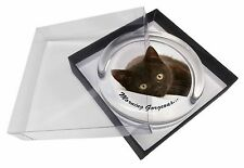 Black Cat 'Morning Gorgeous' Glass Paperweight in Gift Box Christmas P, MG-131PW