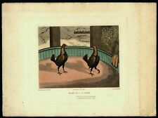 "Cock Fighting 6 old prints c.1820 restrikes c. 1900 ""Proofs"" hand color prints"