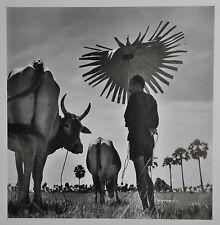 Werner Bischof Limited Ed. Magnum Photo Poster 50x70cm Kambodscha 1952 Cambodia