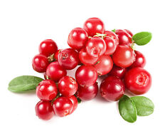 Perennial CRANBERRY Viburnum Fruit Seeds