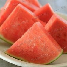 Gardening 10 Seedless watermelon Seeds Excellent  High in Vitamin 1