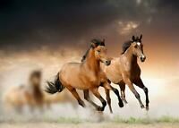Horses Running Giant Print Picture Art Poster - A5 A4 A3 A2 A1 A0 Sizes