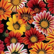 40+ Gazania Sunshine Mix / Deer Resist / Summer To Frost Nonstop Flower Seeds
