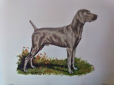 Weimaraner Gun Dog Breed Lithograph Collectable Art Print by Ole Larsen 1950's