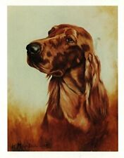 New Irish Setter Head Study Notecards 6 Note Cards 6 Envelopes Ruth Maystead