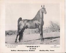 Bailey-Montgomery Stables Horse Piddley At Stud Card SHELBYVILLE TENNESSEE TN