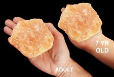 "Orange Calcite 4""-5"" 2 Pound NATURAL Rock and Mineral Specimen Healing Crystal"