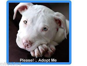 Pit Bull Terrier Dog Adopt me  Refrigerator / Tool Box / Locker Magnet