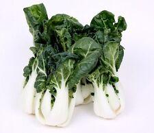 Canton Bok Choy ( Pak Choi ) 2000 seeds *Asian Cuisine * ez grow * CombSh K42