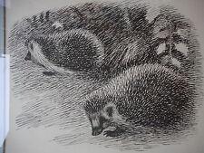 Sikker Hansen Hedgehogs Framed Print Artist Danish Signed outside dim 13.5x17.5