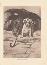 Skye Terrier Other Terrier Dogs Under Umbrella On Rainy Day Antique Print 1909