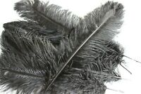 Ten ( 10 ) black  drabs ostrich feather SECOND (B) grade 500-550MM (20-25 inch)