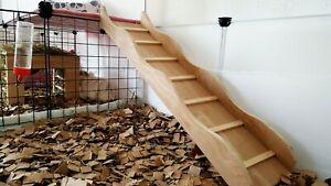 Guinea pig, Rabbit, ramp, Ladder, Small animal