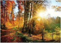 Fototapete Wald Nature Baum Sonne Landschaft Himmel Wiese Wohnzimmer 93