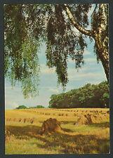 Landschap: hooibouw