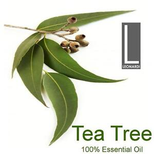2 x Tea Tree 100% Pure Essential Oil 100ml Aromatherapy Therapeutic Grade