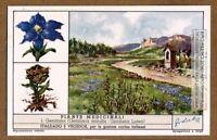 Gentian Flower Plant Medical Herb Drug 60+ Y/O Trade Ad Card