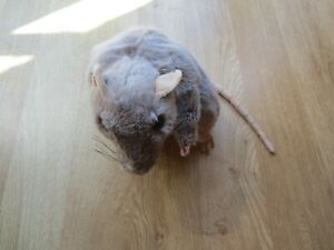 The Puppet Company Rat Realistic European Grey