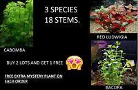 ludwigia bacopa cabomba  aquarium plants   bundle planted tank begginer