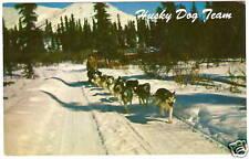HUSKY DOG SLED TEAM AK Alaska OLD PHOTO POSTCARD 1960