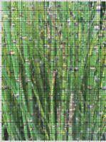 """PREHISTORIC HORSETAIL PLANT"" Photographic Cross-Stitch Chart PDF Pattern 4 DMC"