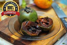 Diospyros Digyna BLACK SAPOTE Persimmon Chocolate Pudding Fruit ~ 5 Seeds ~ Rare