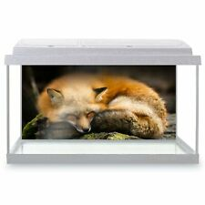 Fish Tank Background 90x45cm - Sleeping Ginger Fox Wild Animal  #21549