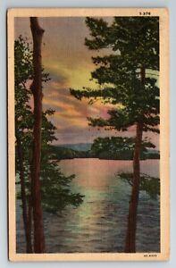Lake Sunset Scene Through the Tree's POSTCARD