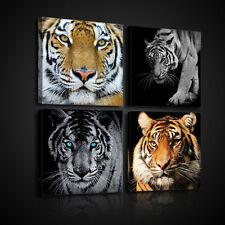 SET (4 teilig) Wandbild Leinwandbild Bild Katze Tiger Tier Natur  3FX10808S20