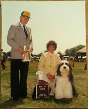 Bearded Collie / Beardie 1985 Champion Dog Show 8 x 10 Photograph / Photo